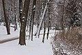 Poertschach Halbinselpromenade Park mit Erlen und Schilfguertel 03012016 9933.jpg