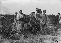 Polish berry pickers.jpg