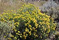 Pollinators0021.tif (25168030148).jpg