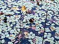 Pond Cameron NC 3855 (15730015496).jpg