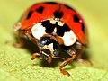 PowerShot beetle (15602191995).jpg
