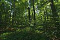 Prírodná rezervácia Borsukov vrch, Národný park Poloniny (12).jpg