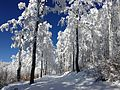 Prat Peyrot - Mont Aigoual (piste ski de fond) 18.jpg