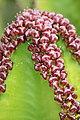 Pretoria Botanical Gardens-018.jpg