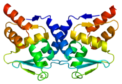 Protein BCL6 PDB 1r28.png