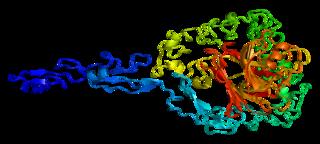Thrombospondin-2 protein-coding gene in the species Homo sapiens