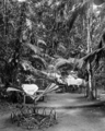 Queensland State Archives 1244 The Gardens Fairyland Kuranda NQ c 1935.png