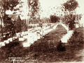 Queensland State Archives 2491 Mr Jones apiary near Goodna c 1898.png