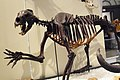 ROM 66 - Gran gato (14336500986).jpg