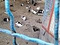 Rabbits 2.jpg