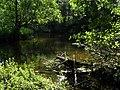 Radew leśna rzeka - panoramio.jpg