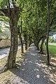 Radovljica Gorenjska cesta Park Buchen-Allee 24062016 2850.jpg