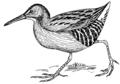 Rail - Bird 2 (PSF).png