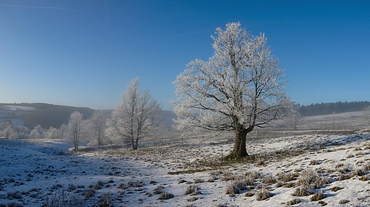 winter in the Hessian Rhön