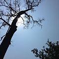 Rays on trees.jpg