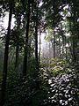 Regenwald Stimmung.jpg