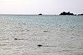 Relâcher phoques Océanopolis 179.jpg