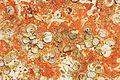Restes de coquillages et d'algues sur un voile de quille (20).JPG
