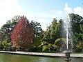 Rhinefield, fountain and autumnal tree - geograph.org.uk - 1010603.jpg