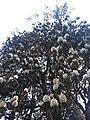 Rhododendron33.jpg