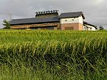 Rice field on Kita-ku, Kobe city, Hyogo, Japan.jpg