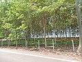 Rim Khong, Chiang Khong District, Chiang Rai, Thailand - panoramio (3).jpg