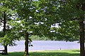 Rinsee bei Lampersberg - geo.hlipp.de - 11352.jpg