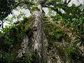 Rio celeste Costa Rica 3.jpg