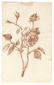 Ritstudie, 1700-talets sista hälft - Skoklosters slott - 99107.tif