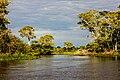 River in the Parque Nacional do Pantanal Matogrossense - Caminho do rio.jpg