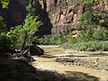 Riverside Walk to Zion Narrows, Zion Canyon, Zion National Park, Utah (8096067174).jpg