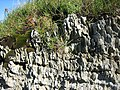 Rock detail close to Pen-Peles - geograph.org.uk - 1000726.jpg