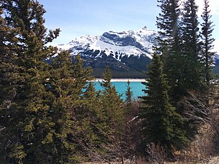 Alberta–British Columbia foothills forests