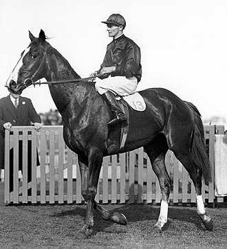 Chelmsford Stakes - Image: Rogilla 1932 VATC Caulfield Cup Return to Scale Jockey George Robinson Trainer Les Haigh