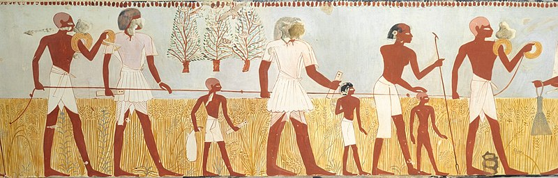 A rope being used to measure fields. Taken from the Tomb of Menna