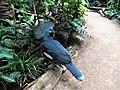 Rotbrust-Krontaube (Zoo Leipzig).jpg