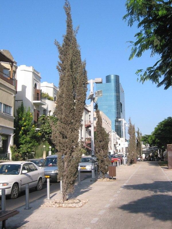 Rothschild Boulevard2