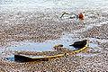 Rowboat, shipwreck in the mudflats of river Exe-9176.jpg