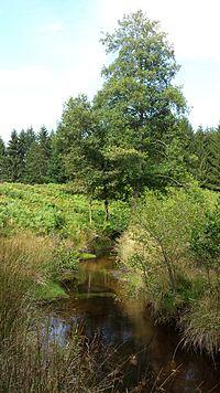 Ruisseau de Boulou.jpg
