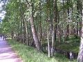 Słowiński National Park2012 03.JPG