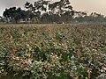 Sadullapur Flower Garden in 2020.09.jpg
