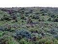 Sagebrush and Grasses - panoramio.jpg