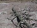 Sakhalin mud Volcano 10.JPG