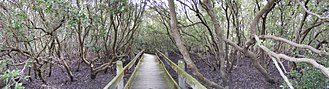 Swamp - A small swamp in Padstow, New South Wales, Australia