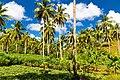 Samaná Province, Dominican Republic - panoramio (62).jpg