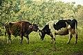 Santuario El Paraíso de los Animales.jpg