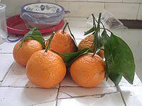 Satsuma mandarin2.jpg
