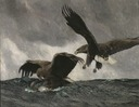 Sea Eagles (Bruno Liljefors) - Nationalmuseum - 18508.tif