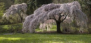Seattle Arboretum trees.jpg