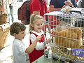 Seattle Tilth Harvest Fair - Orpington chicken.jpg